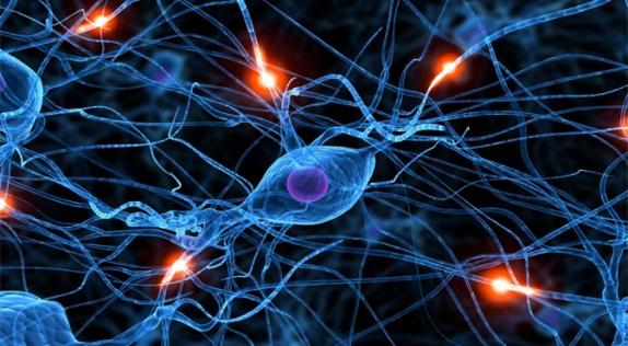 neural-net-head